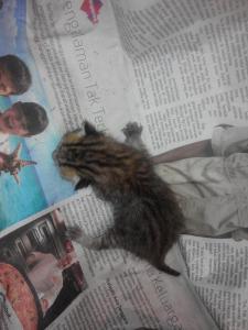 Merawat Kucing Baru Lahir